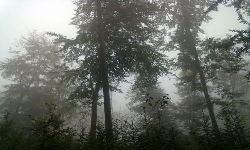 Zdjęcie POLSKA / Dolny Sląsk / góra Ślęża / Ślęża we mgle