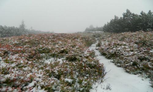 Zdjęcie POLSKA / Beskid / masyw pilska / Pilsko we mgle i śniegu 23.09.14
