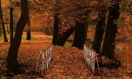 Zdjęcie POLSKA / łodzkie / Skierniewice / Jesiennie