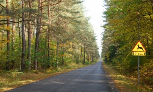 Zdjęcie POLSKA / Augustowszczyzna / Puszcza Augustowska / Droga przez Puszcze Augustowska