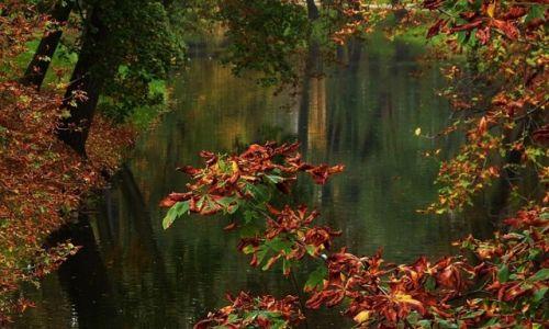 Zdjęcie POLSKA / łodzkie / Skierniewice / Jesień nad rzeką
