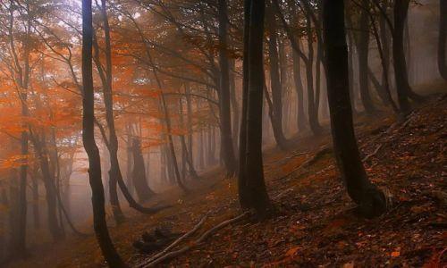 Zdjecie POLSKA / - / Bieszczady / Bieszczadzki las