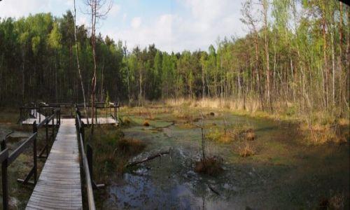 Zdjecie POLSKA / Mazowsze / Mazowiecki Park Krajobrazowy / Goździkowe Bagno