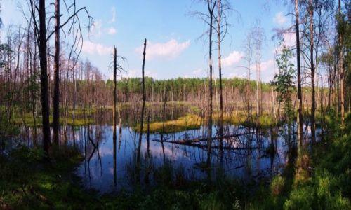 Zdjecie POLSKA / Mazowsze / Mazowiecki Park Krajobrazowy / Rezerwat Bagno Bocianowskie