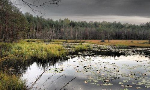 Zdjecie POLSKA / Mazowsze / Mazowiecki Park Krajobrazowy / Rezerwat Czarci Dół