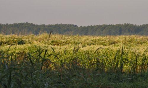 Zdjęcie POLSKA / górna Narew / Narwiański Park Narodowy / Łąki