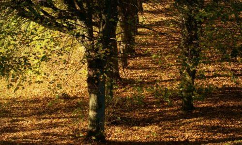 Zdjęcie POLSKA / Kuj-pom. / Ostromecko / Drzewa jesienią