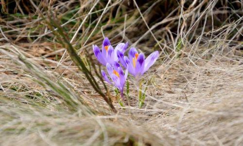 Zdjecie POLSKA / Gorce / Turbacz (1310 m n.p.m.) / byle do wiosny