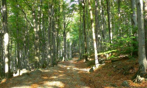 Zdjecie POLSKA / DOLNY ŚLĄSK / Masyw Ślęży / jesienny las bukowy w masywie ślęży