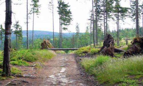 Zdjecie POLSKA / Beskid Śląski / Rezerwat Barania Góra /   Leśna drogą