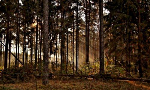 Zdjęcie POLSKA / Kuj-pom. / Gołąbek / Świtanie