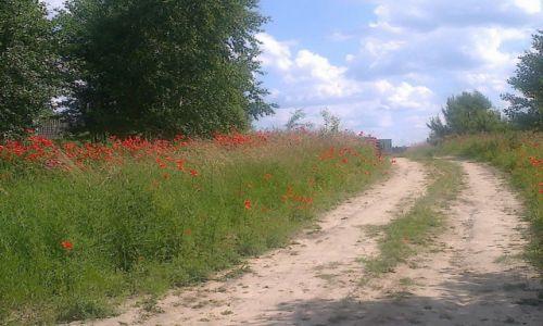 Zdjęcie POLSKA / Ziemia Lubuska / Radęcin / Ostatnie dzikie miejsce w Polsce
