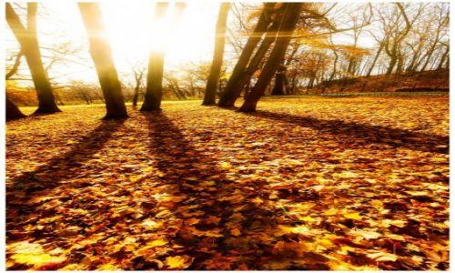 Zdjęcie POLSKA / Jura Krakowsko-Częstochowska / Pilica / Autumn Sun