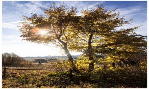 Zdjęcie POLSKA / Jura Krakowsko-Częstochowska / Mirów / Autumn Sun II