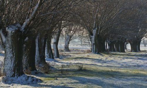 Zdjęcie POLSKA / Kuj-pom / Dźwierzchno / Drzewa w zimowym śnie.