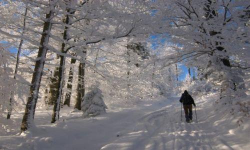Zdjecie POLSKA / okolicy Hali Gibasy / okolicy Hali Gibasy / Zima w Beskidzie Małym