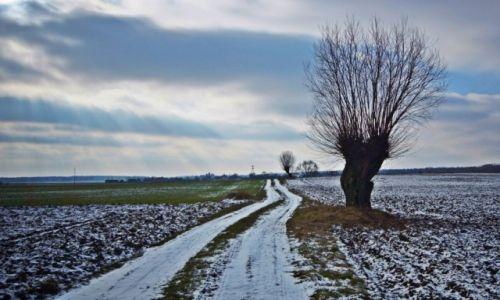 Zdjęcie POLSKA / Kuj-pom / Ostrowo / Zimowy obrazek na Kujawach.