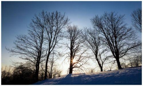 Zdjęcie POLSKA / Jura Krakowsko-Częstochowska / Bobolice / Winter Sun