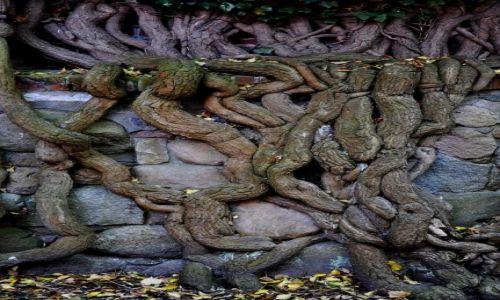 Zdjecie POLSKA / Pomorze / Malbork / Prawie jak Angkor Vat
