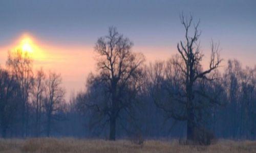 Zdjecie POLSKA / Wielkopolska / Rogalin / drzewa w dolinie