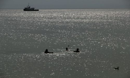 Zdjęcie POLSKA / Zatoka Gdańska / Hel / troje ludzi statek i mewa