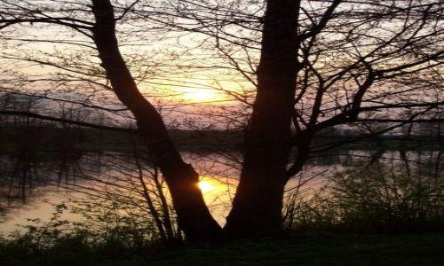 Zdjecie POLSKA / Podlaskie / Białowieża / Zachód słońca  w Puszczy