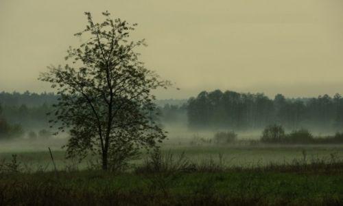 Zdjecie POLSKA / woj. mazowieckie / gm. Stoczek / brodząc we mgle