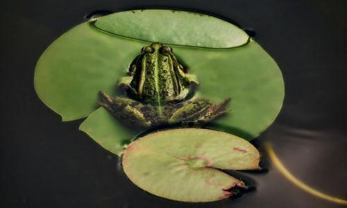 Zdjęcie POLSKA / łodzkie / ..... / Na wyspach zielonych...