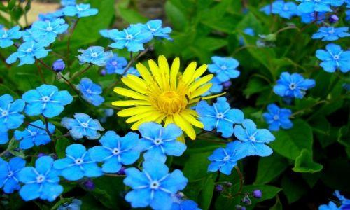Zdjęcie POLSKA / Mazowieckie / Powsin / Chodz pomaluj mój swiat na żółto i na niebiesko...