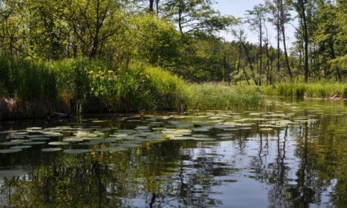 Zdjecie POLSKA / Mazury / Rzeka Krutynia / Widok na rzekę