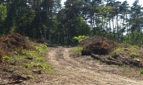 Zdjęcie POLSKA / Wielkopolska / Dziewicza góra / droga w lesie