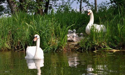 Zdjecie POLSKA / Mazury / rzeka Krutynia / Rodzina
