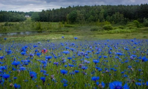Zdjęcie POLSKA / Pomorskie / kaszuby / kaszubskie klimaty