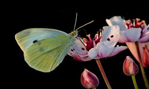Zdjęcie POLSKA / .... / ..... / Z życia motyla...