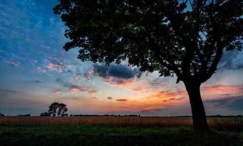 Zdjęcie POLSKA / Wielkopolska / Osowo / Vanilla sky