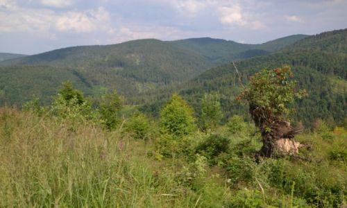 Zdjęcie POLSKA / Beskid Żywiecki / Pod Majcherową / Rezerwat