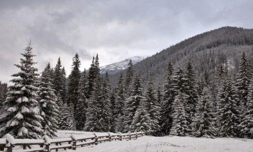 Zdjecie POLSKA / Tatry / Hala Ornak / Pierwszy śnieg