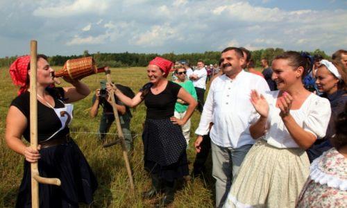 POLSKA / Biebrzański Park Narodowy / Bagno Ławki / W nagrodę łyk z gąsiorka