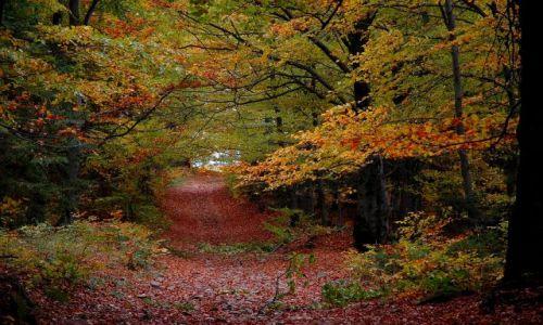 Zdjęcie POLSKA / Beskid Żywiecki / Beskid Żywiecki / jesień w Beskidach