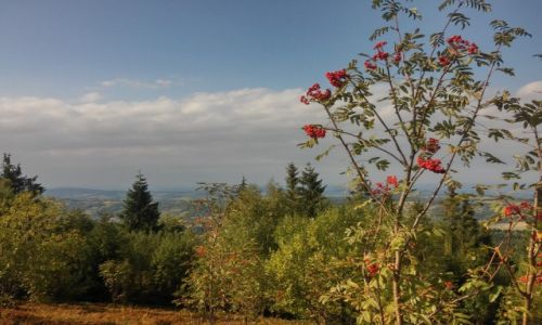 Zdjęcie POLSKA / beskid makowski / okolice góry koskowej / kosztujemy chmury :)
