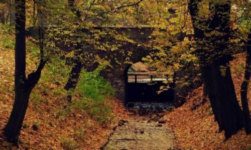 Zdjęcie POLSKA / łodzkie / Skierniewice / Dywany w kolorze jesieni