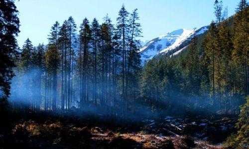 Zdjęcie POLSKA / Tatry Zachodnie / Dolina Starorobociańska / Oddech lasu