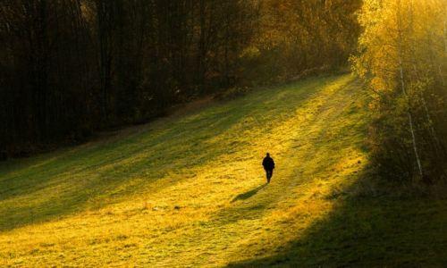 Zdjęcie POLSKA / Małopolska / Gorce / W stronę Słońca