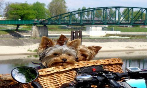 Zdjecie POLSKA / Opole / Opole Bolko / Tak lubimy podróżować