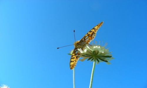 Zdjęcie POLSKA / Opolski / Staniszcze wielkie / Motyl perłowiec z poziomu kajaka