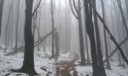 Zdjecie POLSKA / Podkarpacie / Beskid Niski, Magura / Beskid Niski i uroki chmur