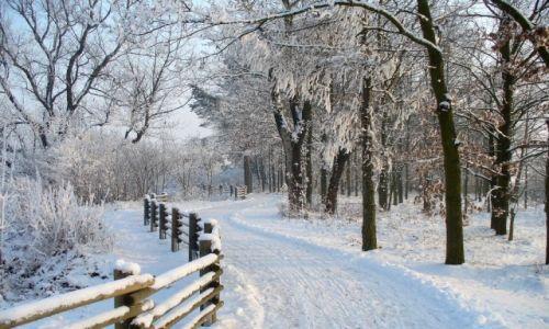 Zdjęcie POLSKA / opolskie / Nad Odrą / Nasza droga rowerowa zimą