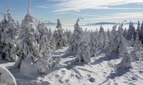 Zdjęcie POLSKA / Beskid Ślaski / Małe Skrzyczna / oto zima :)