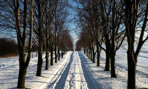 Zdjęcie POLSKA / opolskie / Groszowice / Aleja lipowa zimą