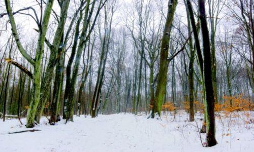 Zdjęcie POLSKA / Kaszuby / Kiełpino Górne / leśna droga